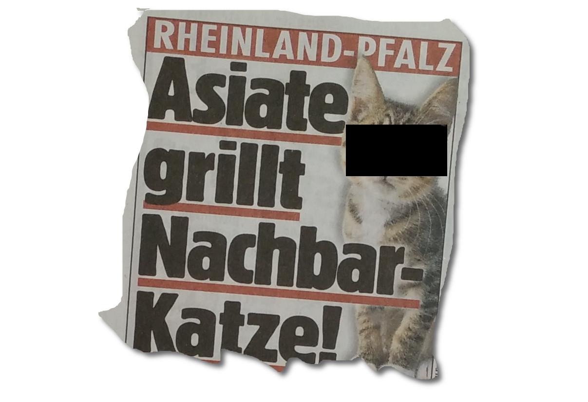 BILD: Asiate grillt Katze